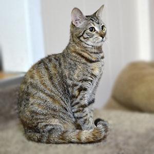 Cat sits still