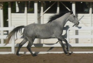 Tucker Galloping