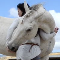 Training Horse to Hug with Clicker