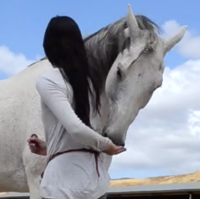 Teach Your Horse to Hug