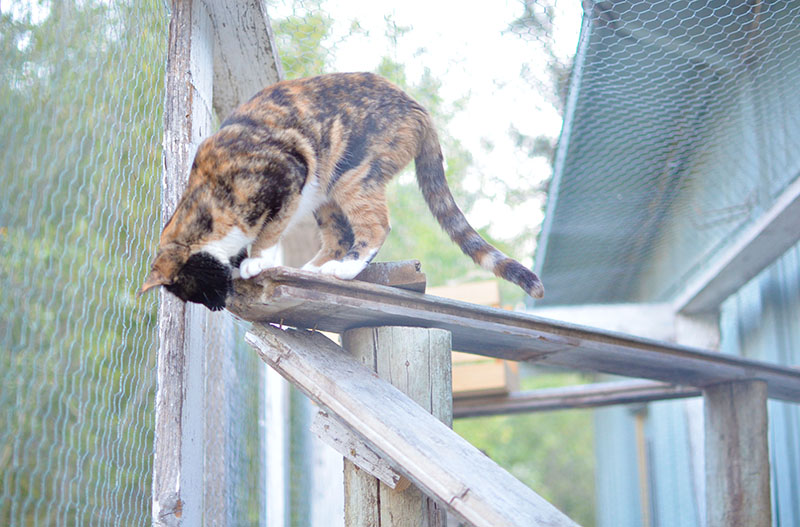 catio for cats climbing
