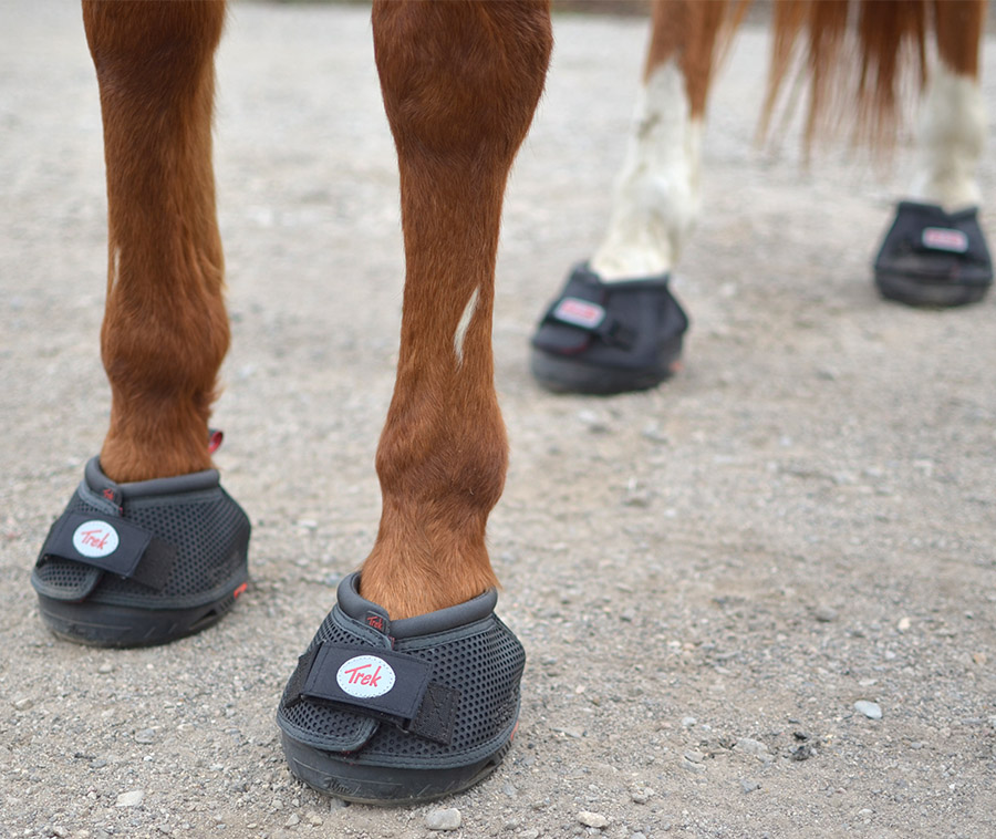 Cavallo Horse Boots  The best horse hoof boot – When It Clicks 83e7a5e35e