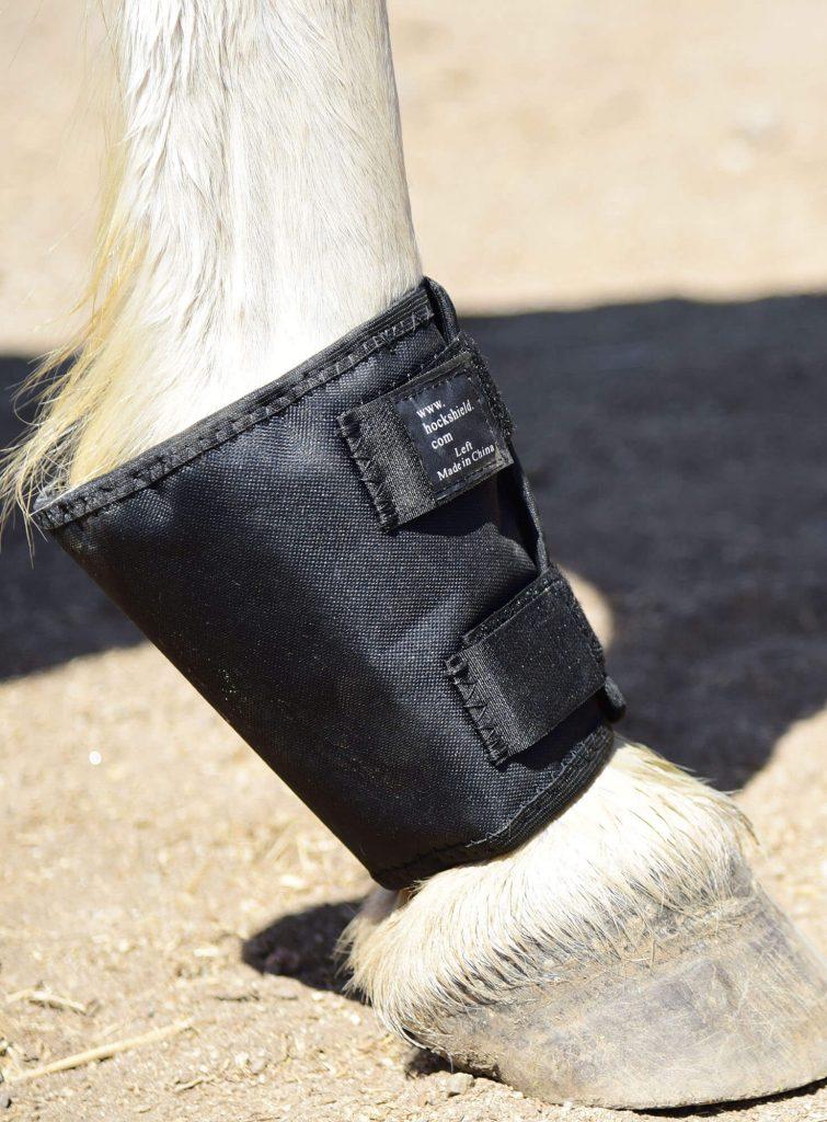 Hock \u0026 Fetlock Shields by Click Horse
