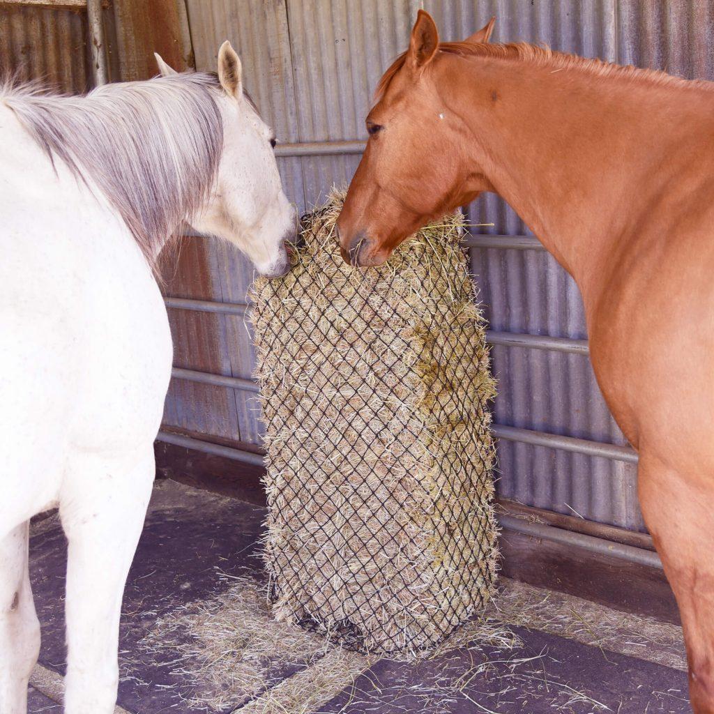 hay chix slow feeder hay nets