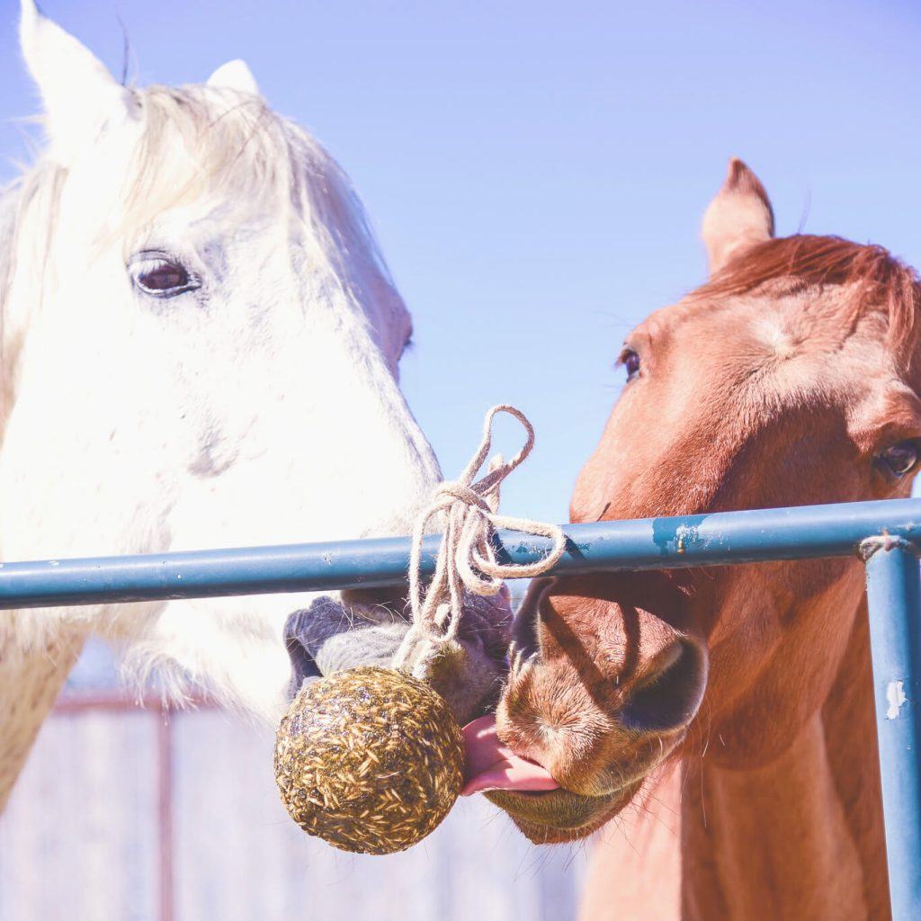 All natural lick treats for horses