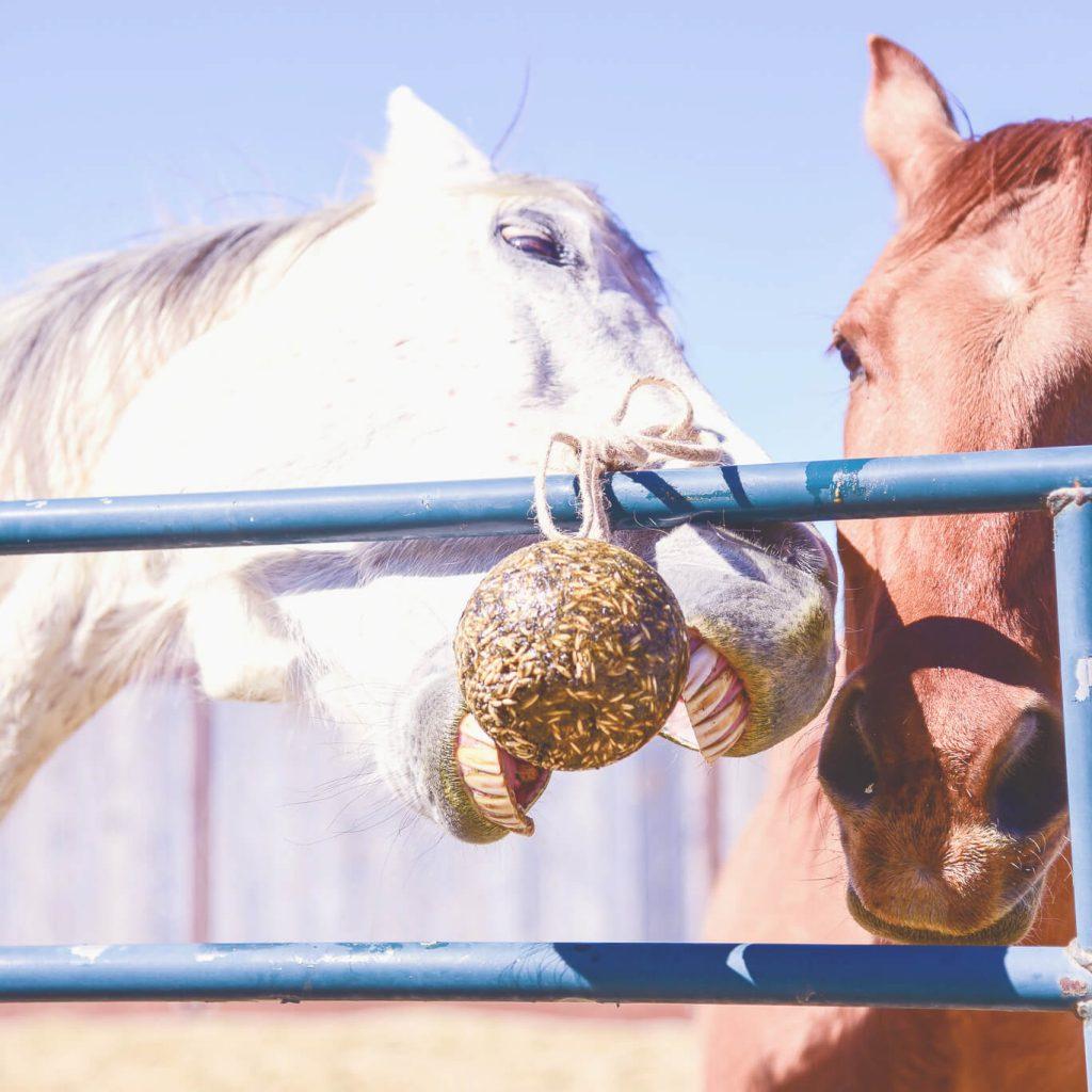 horses love hanging treats
