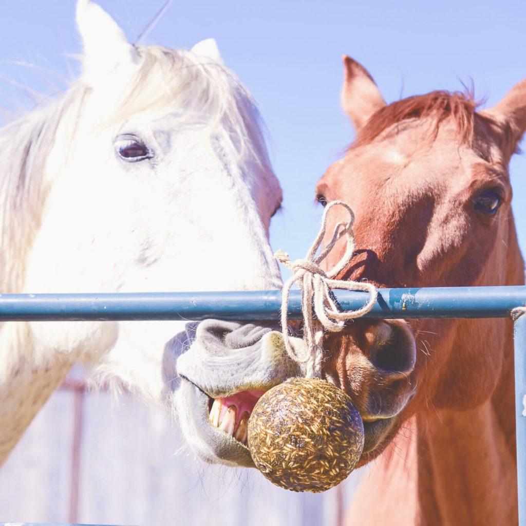Nutritional Treats Hanging Lick Ball