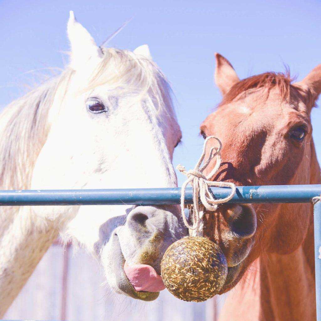 Horses Hanging Lick Treats