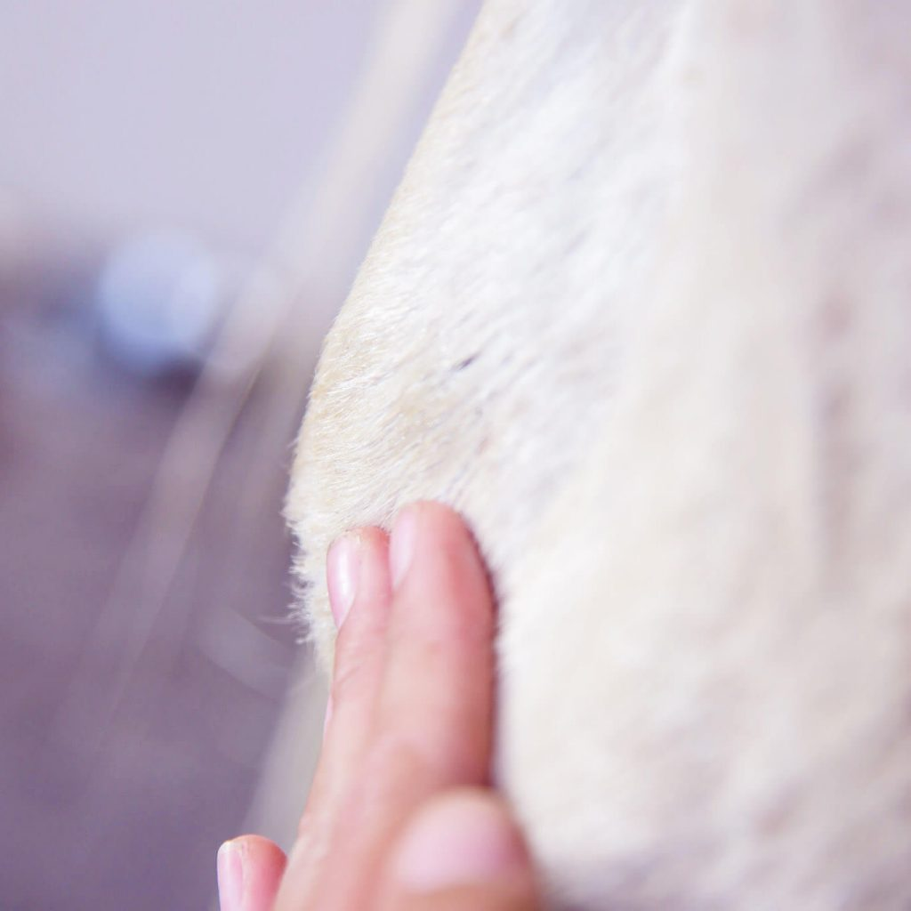 applying product to hock of horse