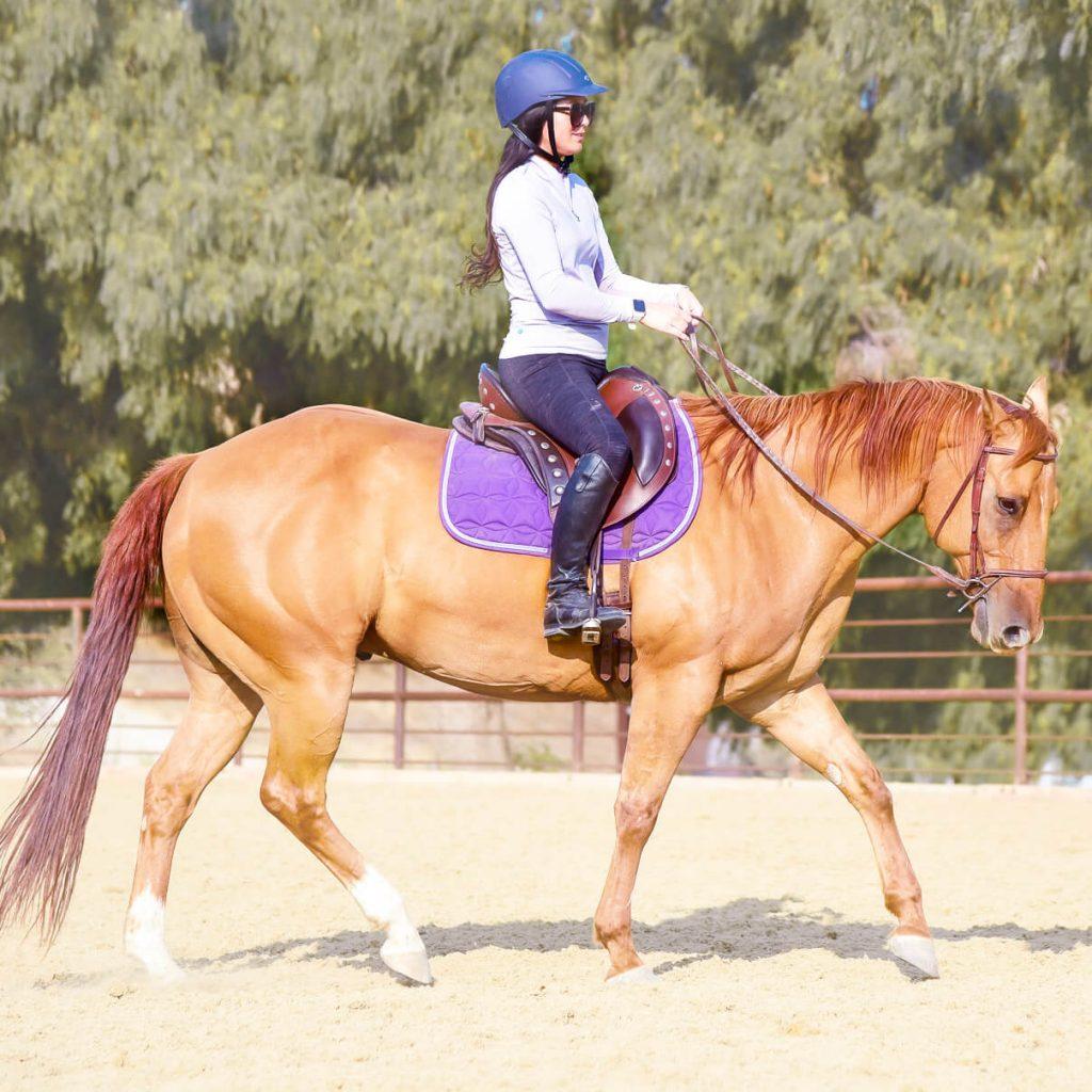 schooling red dun horse